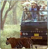 Canter Safari,Ranthambore
